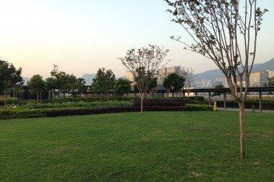 Rooftop Garden Lawn Area