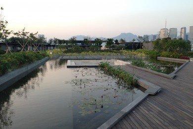 Rooftop Garden Water Garden